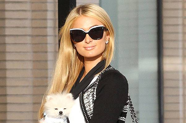 Paris Hilton takes her $13k Pomeranian puppy shopping in Beverly Hills